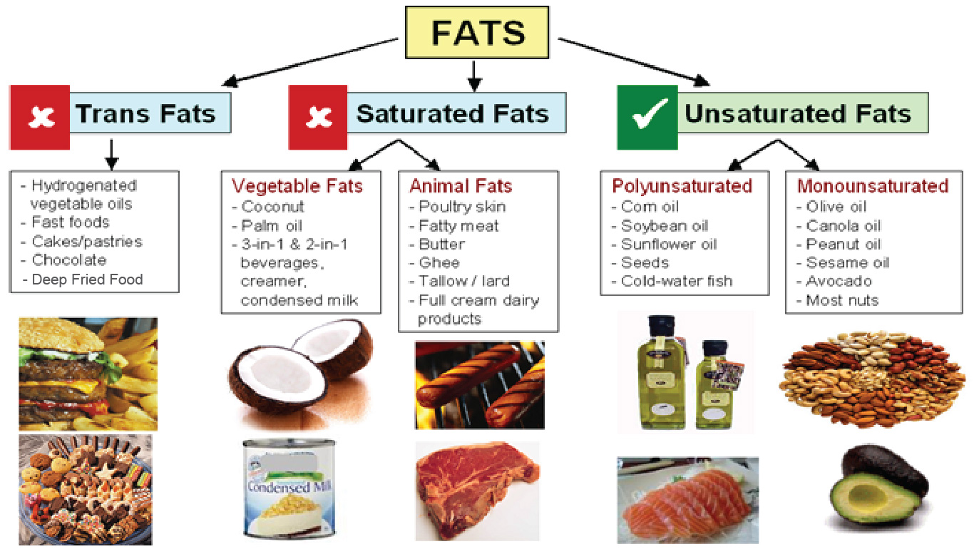 What is the difference between oils and fats