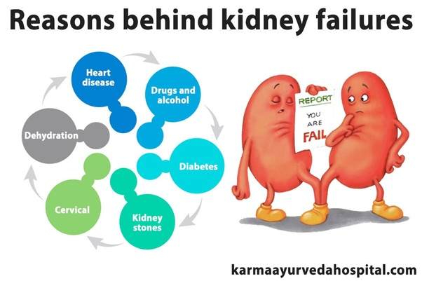 Best Tips To Prevent Kidney Diseases - Picture