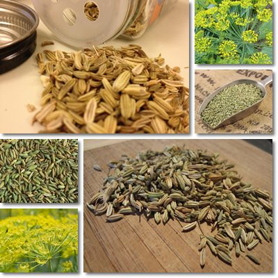 Health Benefits Of Fennel Seeds Saunf - Picture