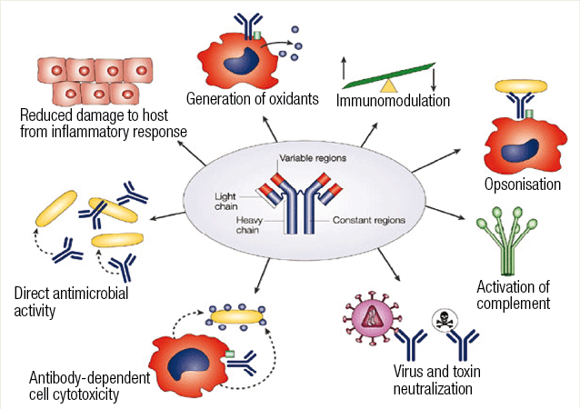 Natural And Best Way To Boost The Immune System - Mechanism
