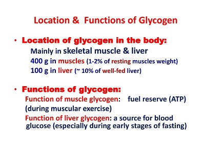 Difference Between Starch And Glycogen - what is glycogen