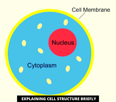 Difference Between Protoplasm And Cytoplasm-what is cytoplasm